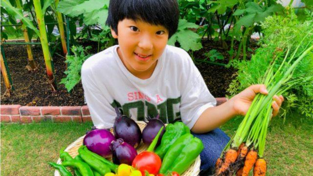 野菜博士緒方湊画像